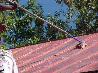 In this case cleanser is used by Roof Menders, Inc